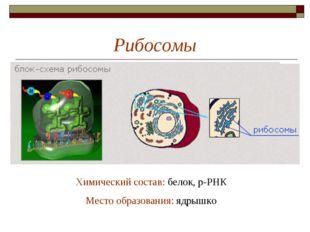Рибосомы Химический состав: белок, р-РНК Место образования: ядрышко