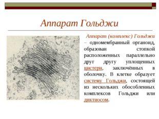 Аппарат Гольджи Аппарат (комплекс) Гольджи – одномембранный органоид, образов