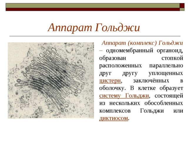 Аппарат Гольджи Аппарат (комплекс) Гольджи – одномембранный органоид, образов...