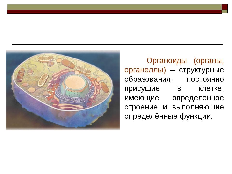 Органоиды (органы, органеллы) – структурные образования, постоянно присущие...