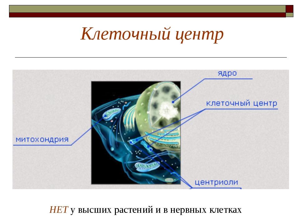 Клеточный центр НЕТ у высших растений и в нервных клетках