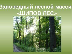 Заповедный лесной массив «ШИПОВ ЛЕС»