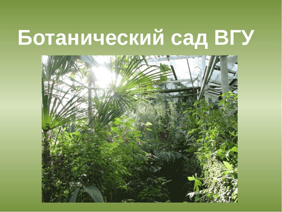 Ботанический сад ВГУ