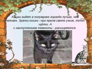 Кошки видят в полумраке гораздо лучше, чем человек. Зрачки кошки –при ярком