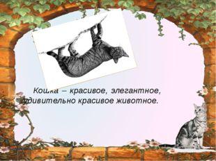 Кошка – красивое, элегантное, удивительно красивое животное. http://ku4mina.
