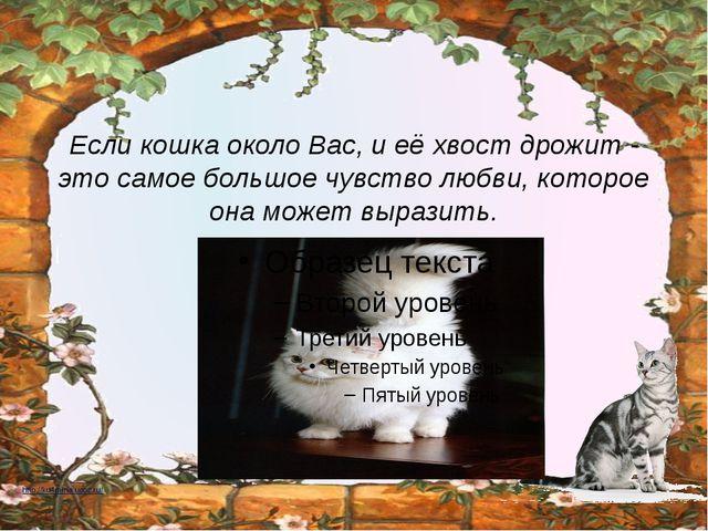 Если кошка около Вас, и её хвост дрожит - это самое большое чувство любви, ко...