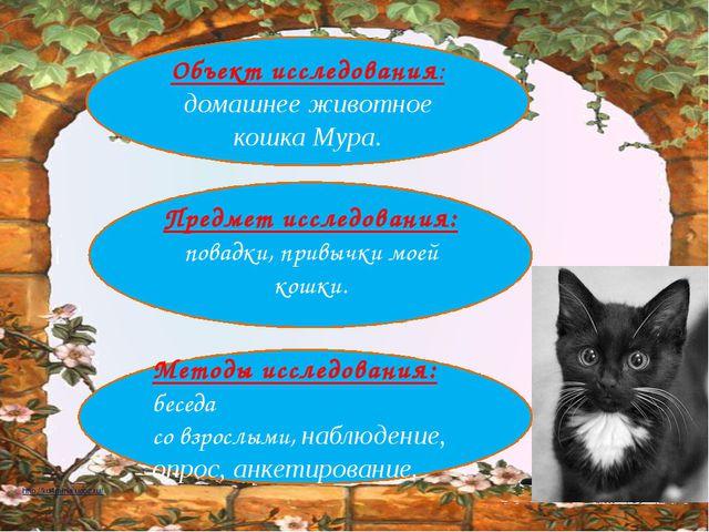 Объект исследования: домашнее животное кошка Мура. Предмет исследования: пов...