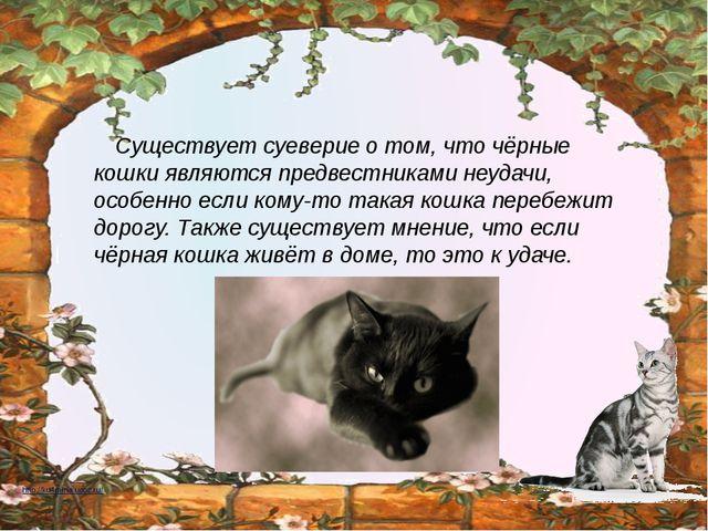 Существует суеверие о том, что чёрные кошки являются предвестниками неудачи,...