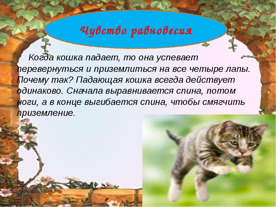 Когда кошка падает, то она успевает перевернуться и приземлиться на все четы...