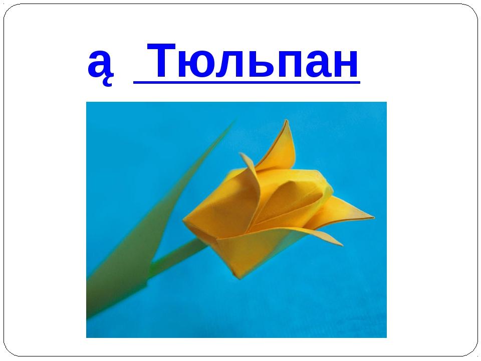 ② Тюльпан