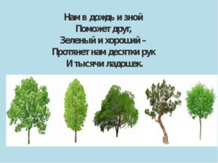 Нам в дождь и зной Поможет друг, Зеленый и хороший – Протянет нам десятки