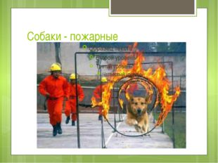 Собаки - пожарные