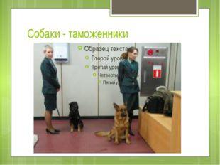 Собаки - таможенники