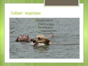 Собаки - водолазы
