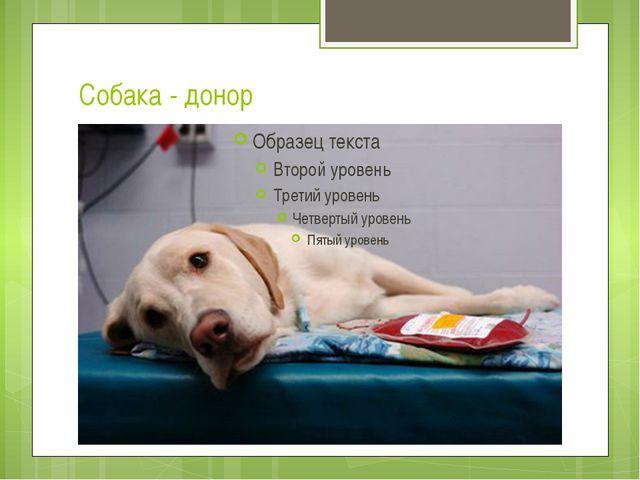Собака - донор