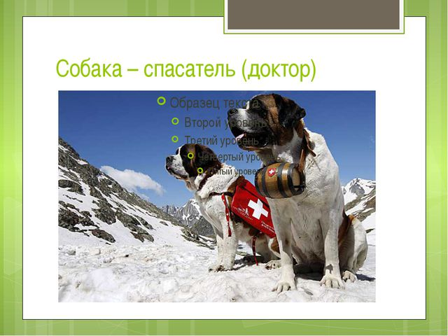 Собака – спасатель (доктор)