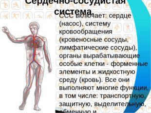 Сердечно-сосудистая система. ССС включает: сердце (насос), систему кровообращ