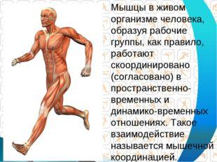 Мышцы в живом организме человека, образуя рабочие группы, как правило, работа