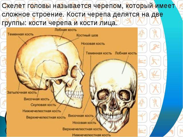 Скелет головы называется черепом, который имеет сложное строение. Кости череп...