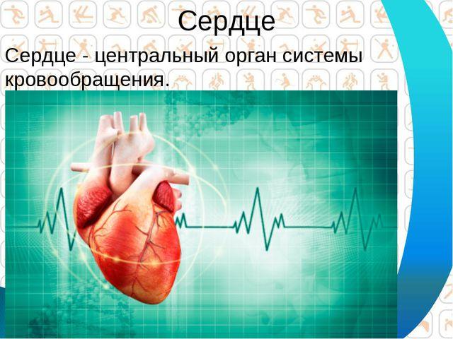 Сердце Сердце - центральный орган системы кровообращения.