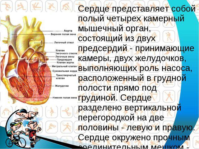 Сердце представляет собой полый четырех камерный мышечный орган, состоящий из...