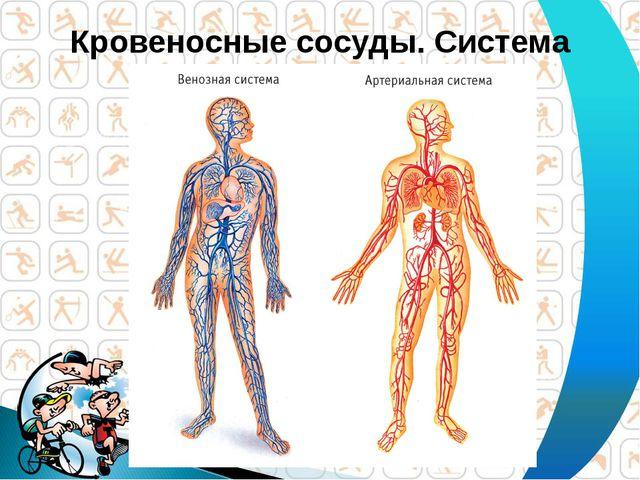 Кровеносные сосуды. Система кровообращения.