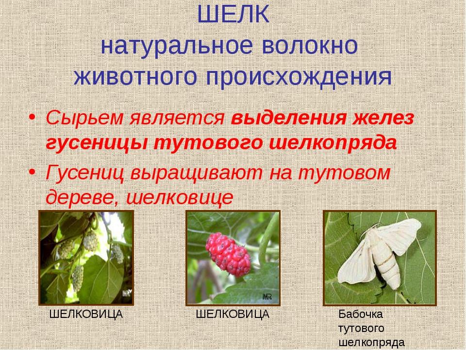 ШЕЛК натуральное волокно животного происхождения Сырьем является выделения же...