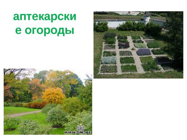 аптекарские огороды