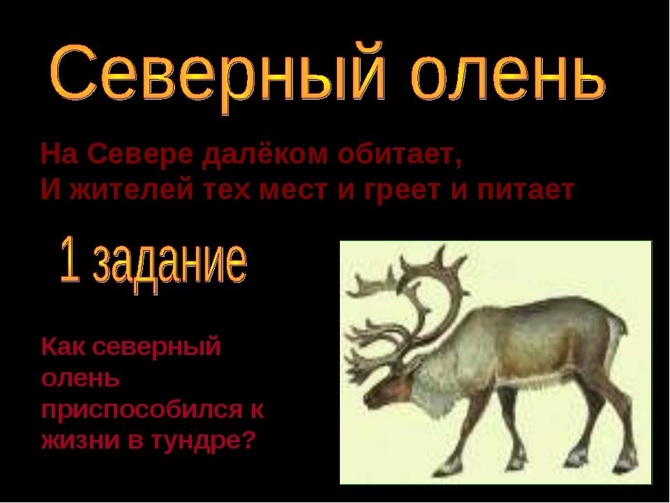 На Севере далёком обитает, И жителей тех мест и греет и питает. Как северный...