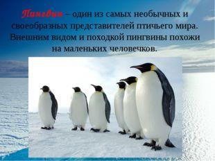 Пингвин – один из самых необычных и своеобразных представителей птичьего мира