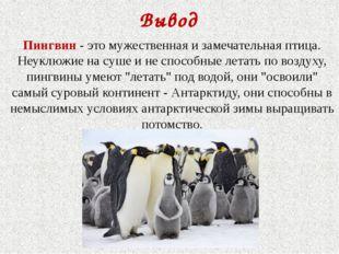 Вывод Пингвин - это мужественная и замечательная птица. Неуклюжие на суше и н