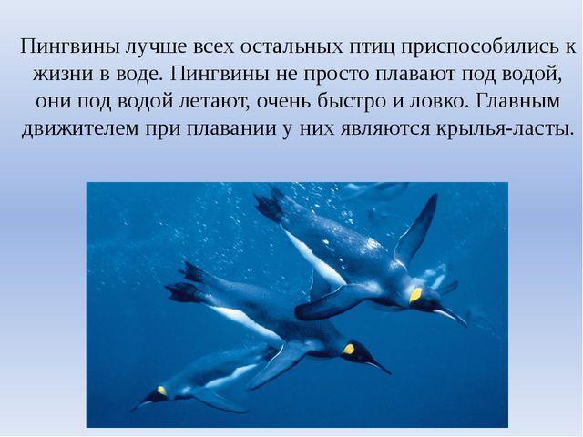 Пингвины лучше всех остальных птиц приспособились к жизни в воде. Пингвины не...