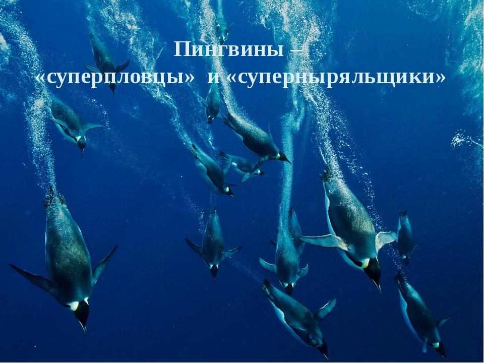 Пингвины – «суперпловцы» и «суперныряльщики»