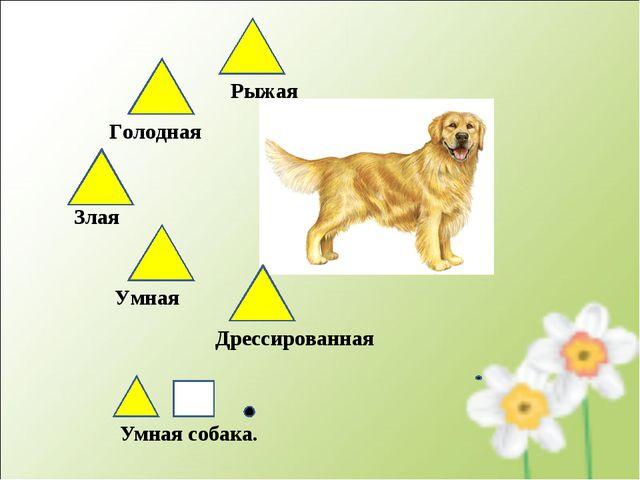 Умная собака. Рыжая Голодная Злая Дрессированная Умная