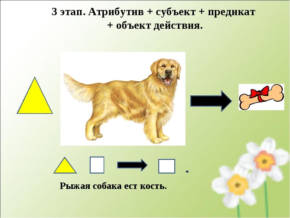 Рыжая собака ест кость. 3 этап. Атрибутив + субъект + предикат + объект дейст...