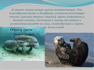 В океанах живет четыре группы млекопитающих. Это китообразные (киты и дельфин