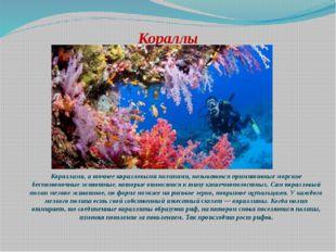 Кораллы Кораллами, а точнее коралловыми полипами, называются примитивные морс