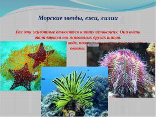 Морские звезды, ежи, лилии Все эти животные относятся к типу иглокожих. Они