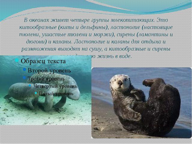 В океанах живет четыре группы млекопитающих. Это китообразные (киты и дельфин...