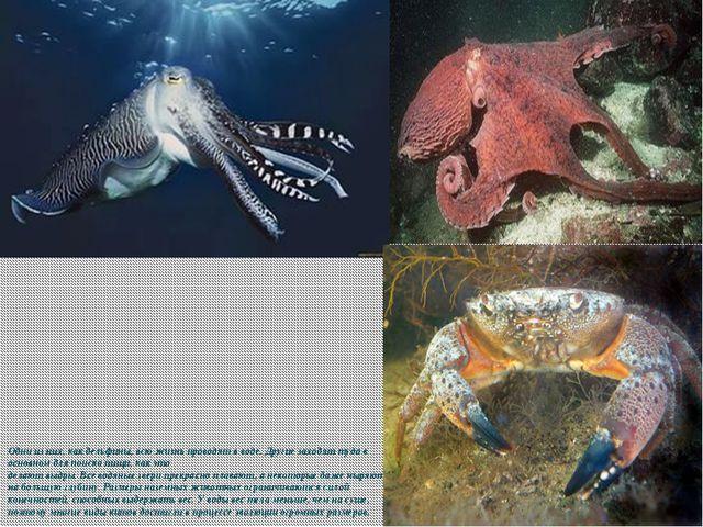 Одни из них, как дельфины, всю жизнь проводят в воде. Другие заходят туда в о...
