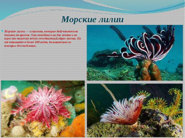 Морские лилии Морские лилии — существа, которые действительно похожи на цвето...