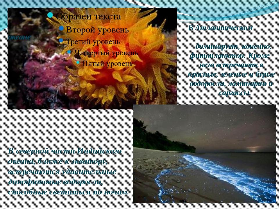 В Атлантическом океане доминирует, конечно, фитопланктон. Кроме него встреча...