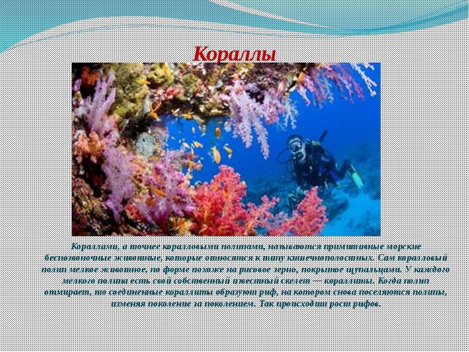 Кораллы Кораллами, а точнее коралловыми полипами, называются примитивные морс...