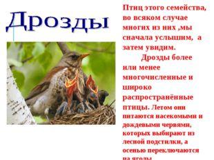 Птиц этого семейства, во всяком случае многих из них ,мы сначала услышим, а з