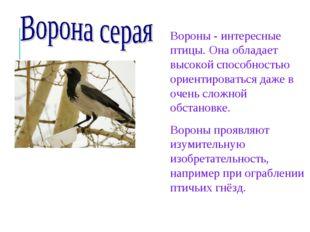 Вороны - интересные птицы. Она обладает высокой способностью ориентироваться