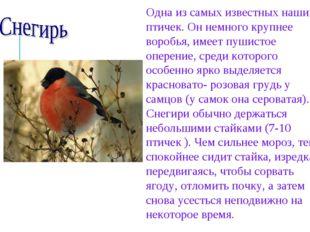 Одна из самых известных наших птичек. Он немного крупнее воробья, имеет пушис