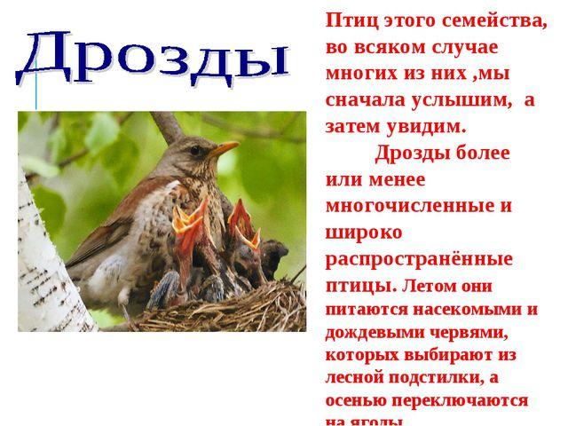 Птиц этого семейства, во всяком случае многих из них ,мы сначала услышим, а з...