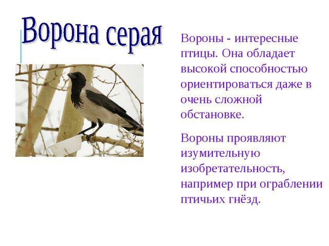 Вороны - интересные птицы. Она обладает высокой способностью ориентироваться...