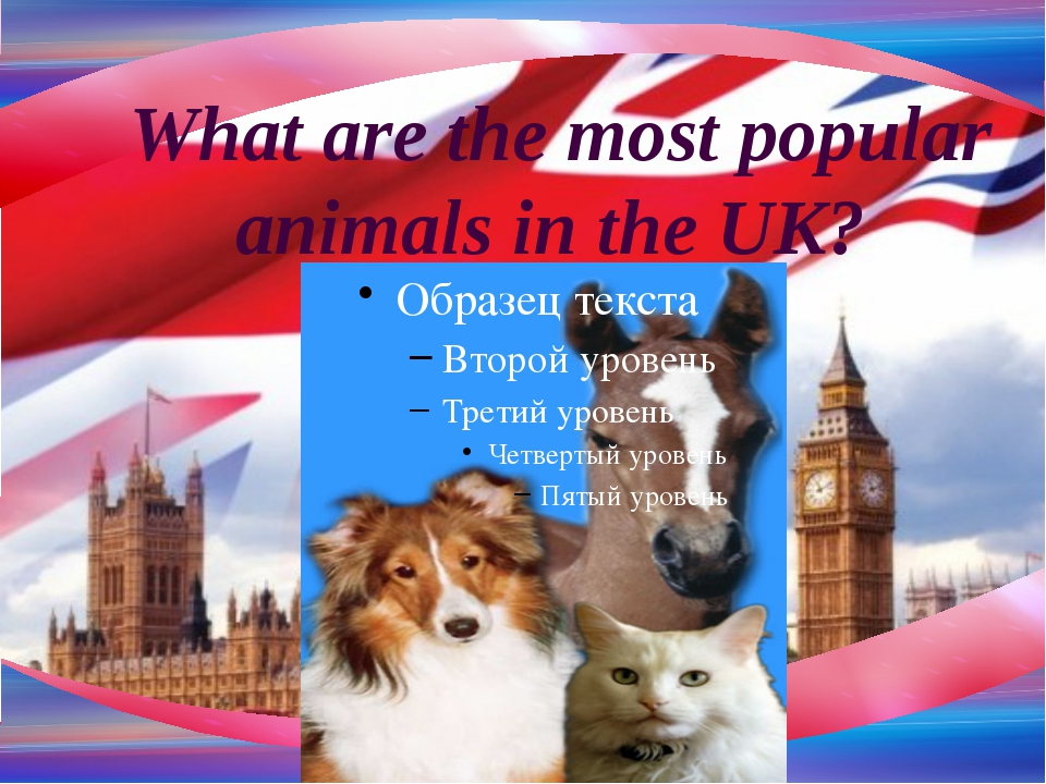 What are the most popular animals in the UK?