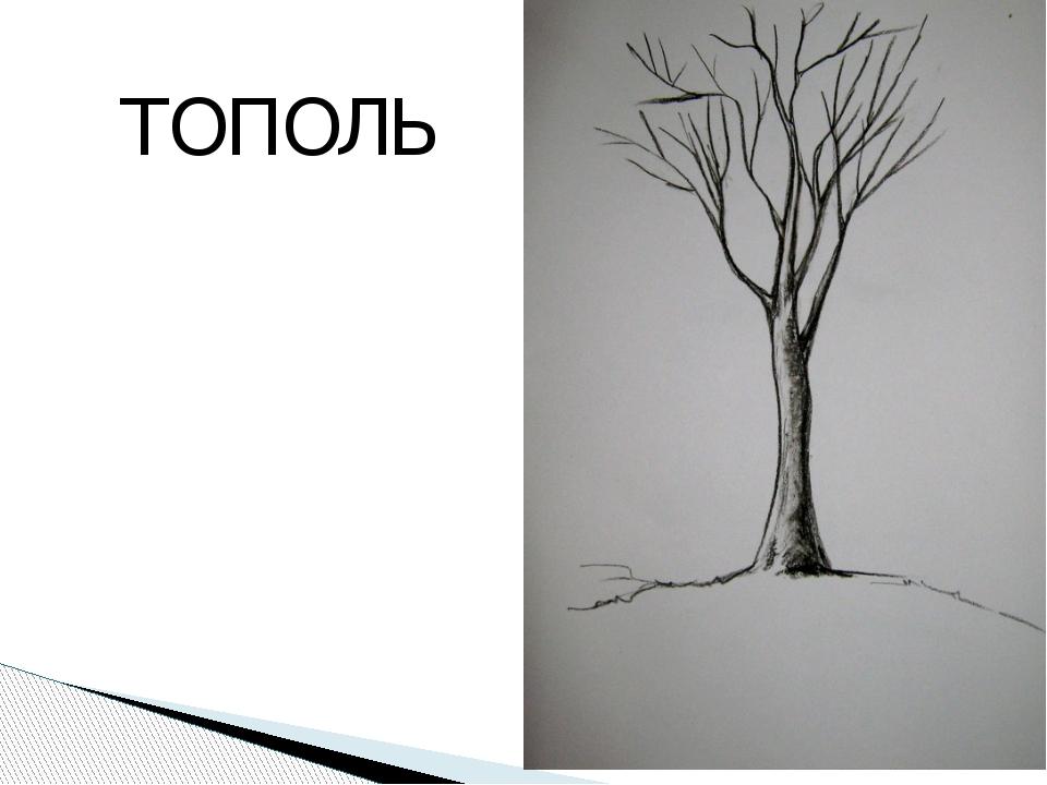ТОПОЛЬ